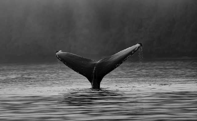 Louie Giglio – What Song Are Stars & Whales Singing?