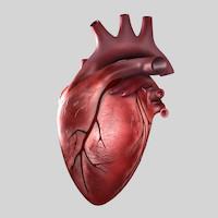 Heart-2nd-image.jpg6a5ab5b5-8c97-4583-82f1-a08755fe36c7Original